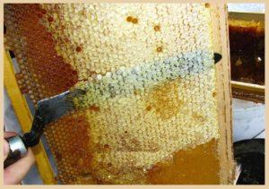 Панкреатит поджелудочная мед можно thumbnail