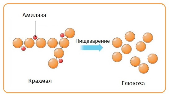 Амилаза-крахмал-глюкоза
