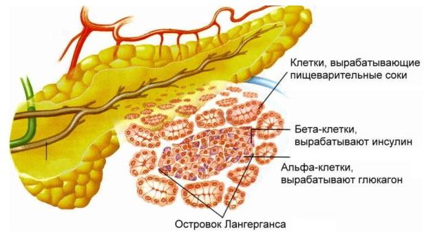 Воспаление поджелудочной железы - симптомы и лечение
